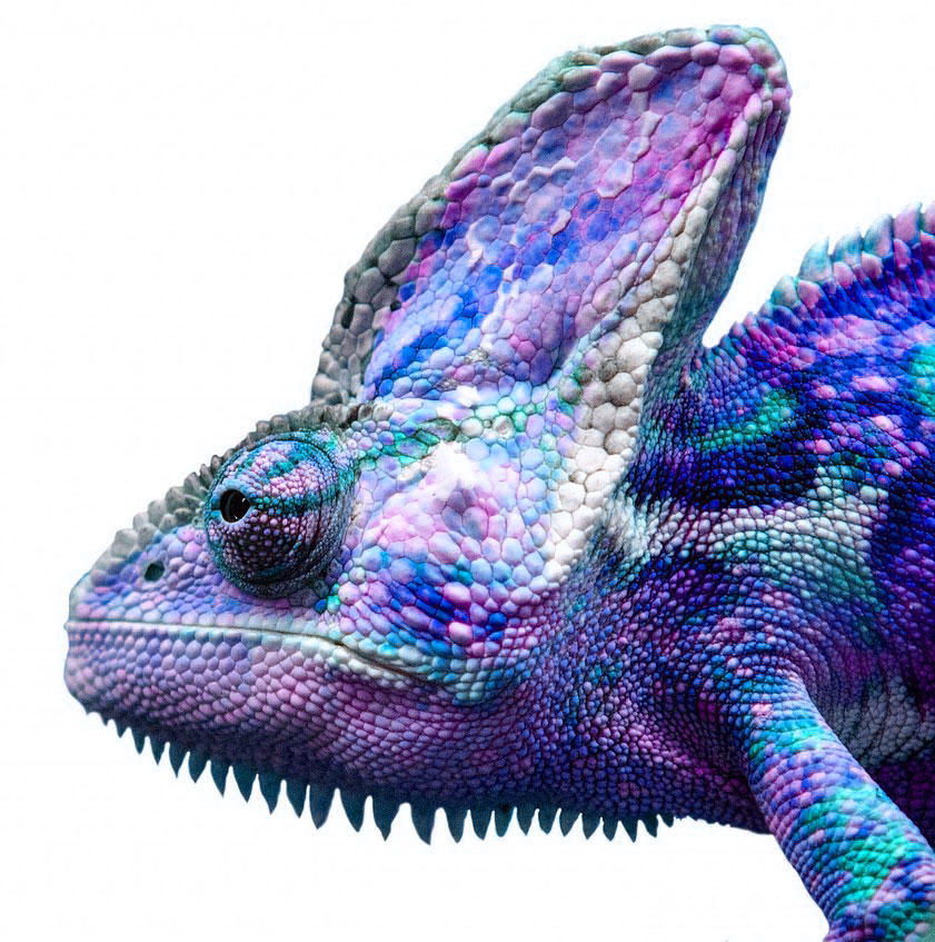 about-me-chameleon
