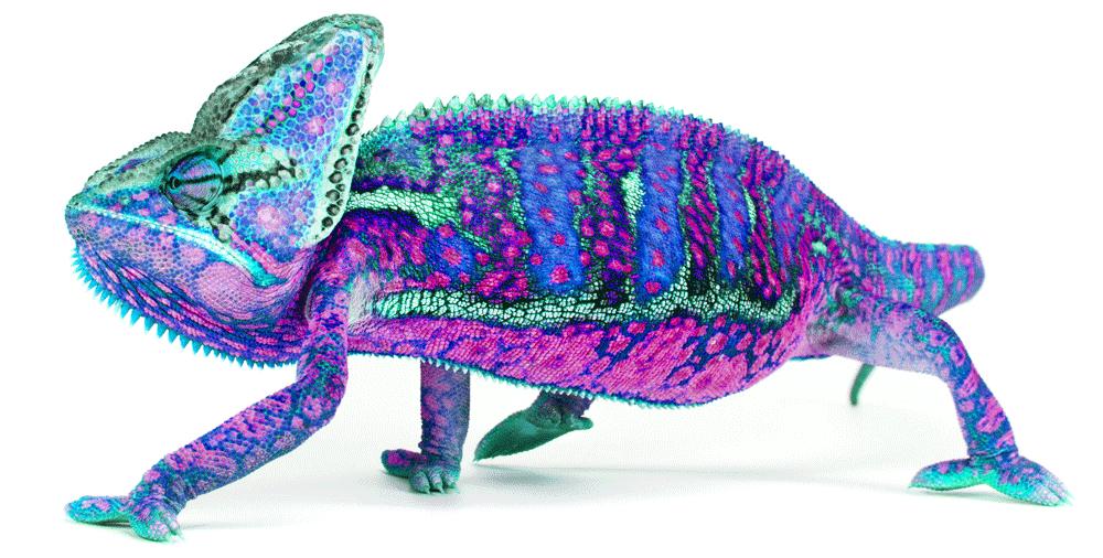 chameleon-13