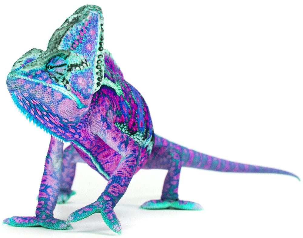 chameleon-14